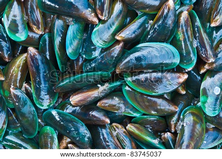 Freas mussels at the market in Thaillnd - stock photo