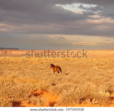 Free  Navajo Horse - stock photo