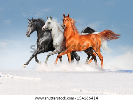 free three arabian horses in winter field - stock photo