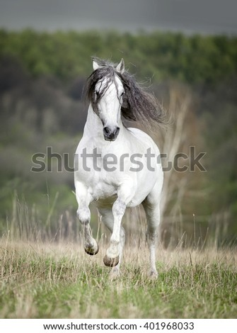 free white andalusian horse with long mane