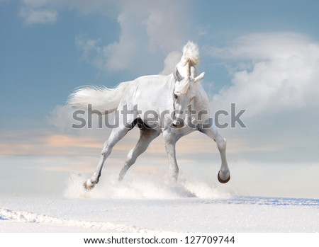 free white horse on winter background - stock photo
