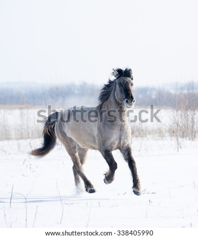 free wild horse in winter - stock photo