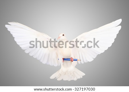 Freedom birds fly freely paw pencil grip dove isolated on a white background. The idea to write a comment for liberty, freedom and democratic status. - stock photo