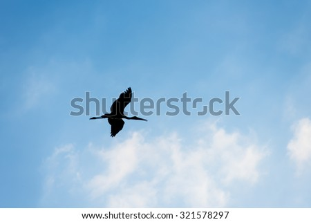 Freedom concept, Silhouette of bird flying with cloud in blue sky