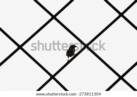 Freedom for the sparrow - stock photo