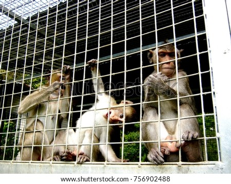 freedom of wildlife in the cage