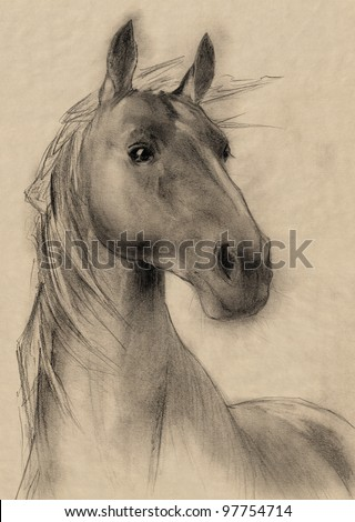 freehand horse head sepia toned pencil drawing - stock photo