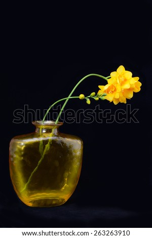 freesia flowers in glass vase, isolated on black - stock photo