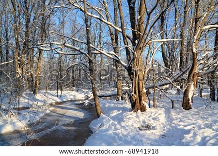 freeze creek in oak wood - stock photo