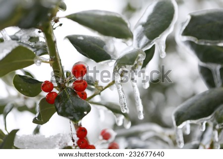 freezing rain - stock photo
