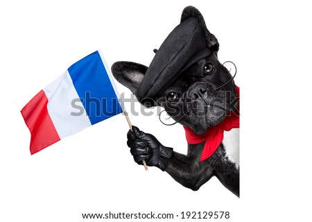 french bulldog behind a white and blank banner waving flag of france - stock photo
