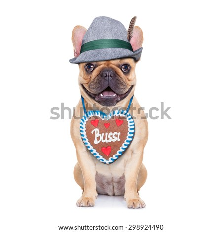 french bulldog dog dressed up as bavarian with gingerbread as collar, isolated on white background