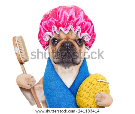 french bulldog dog having a spa or wellness treatment with shower cap ,isolated on white background - stock photo