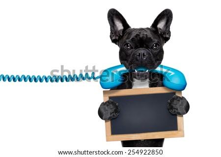 french bulldog dog holding a old retro telephone and a blank empty blackboard,isolated on white background - stock photo