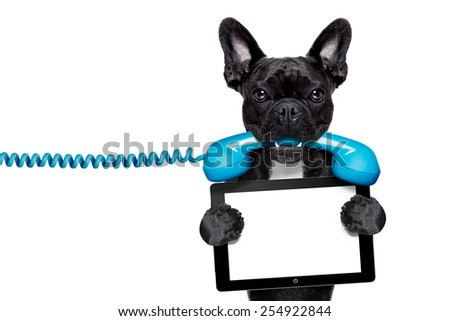 french bulldog dog holding a old retro telephone and a blank tablet pc computer ebook,isolated on white background - stock photo