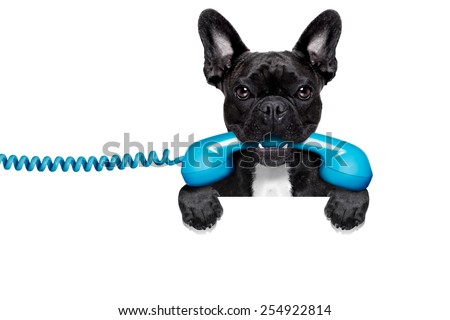 french bulldog dog holding a old retro telephone behind a blank empty banner or placard,isolated on white background - stock photo