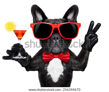 french bulldog dog holding martini cocktail glass ready to have fun and party, isolated on white background# - stock photo