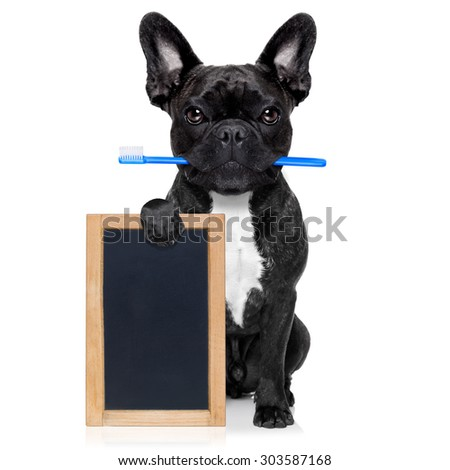 french bulldog dog holding toothbrush with mouth at the dentist or dental veterinary, isolated on white background, holding a blank empty banner , placard or blackboard - stock photo