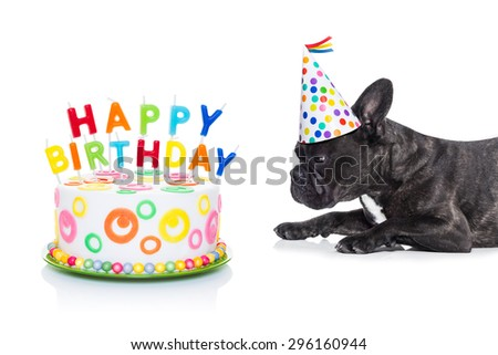 french bulldog dog  hungry for a happy birthday cake  ,wearing party hat  , isolated on white background - stock photo