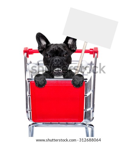 french bulldog dog inside a shopping cart trolley , behind  a blank  empty banner holding a placard, with a bone in mouth , isolated on white background - stock photo