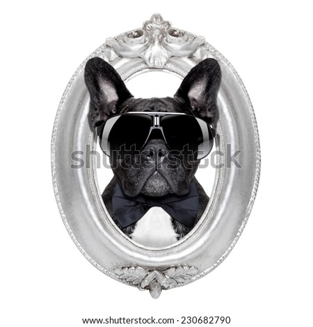 french bulldog dog portrait in a wooden retro old frame , isolated on white background - stock photo