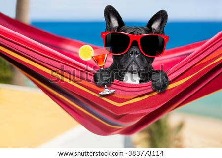 french bulldog dog relaxing on a fancy red  hammock  with sunglasses and martini cocktail drink, on summer vacation holidays at the beach - stock photo