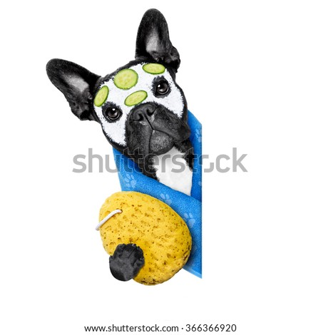 french bulldog dog relaxing  with beauty mask in   spa wellness center ,getting a facial treatment with  moisturizing cream mask and cucumber ,beside blank empty banner or placard - stock photo
