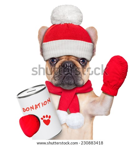 french bulldog dog with a donation can , collecting money for  charity, as a winter edition , isolated on white background