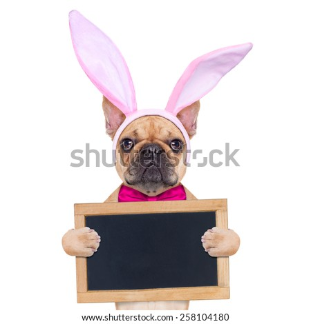 french bulldog dog  with bunny easter ears and a pink tie, holding a blank banner,placard or blackboard, isolated on white background - stock photo