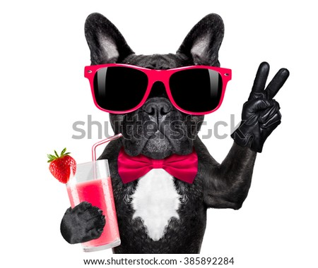 french bulldog dog  with cocktail milkshake smoothie and funny glasses with peace victory fingers , isolated on white background - stock photo