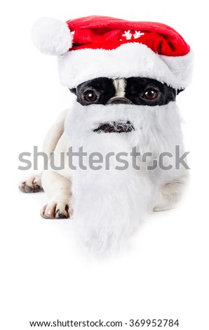 French bulldog dressed as Santa Claus, color and vertical composition, isolated on white in studio