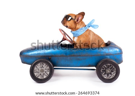 French Bulldog enjoys a ride in pedal car, isolated on white - stock photo