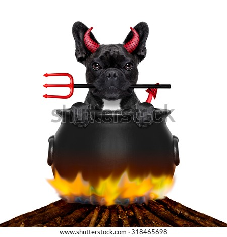french bulldog  halloween devil dog burning inside a boiler on a bonfire like a witch, isolated on white background - stock photo