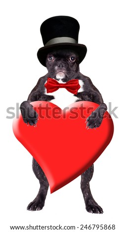 French bulldog in a black cylinder with a heart in his paws - stock photo