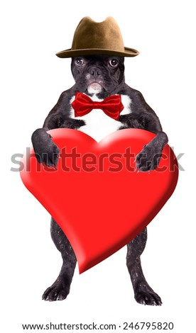 French Bulldog in a hat with a heart in his paws - stock photo