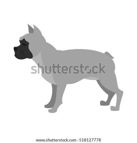 French bulldog in gray color