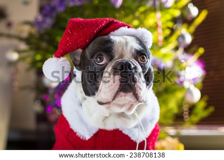 French bulldog in santa costume under christmas tree - stock photo