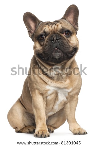 French Bulldog, 18 months old, sitting in front of white background - stock photo