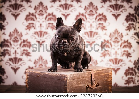 french bulldog over vintage background - stock photo