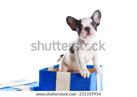 French bulldog puppy in present box isolated on white - stock photo