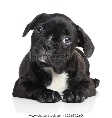 French bulldog puppy lying on a white background - stock photo