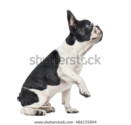 Why Do Dogs Lift One Paw