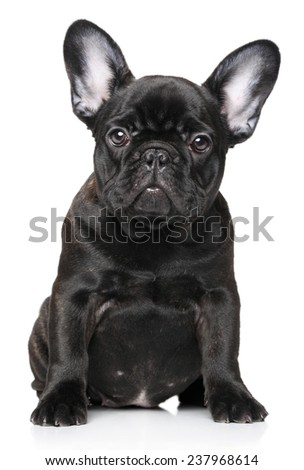 French Bulldog puppy on a white background - stock photo