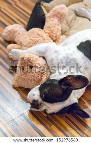 French bulldog puppy sleeping with teddy bear - stock photo