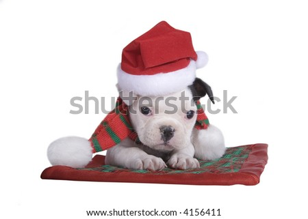 French bulldog puppy with Christmas hat and scarf on plaid blanket. - stock photo