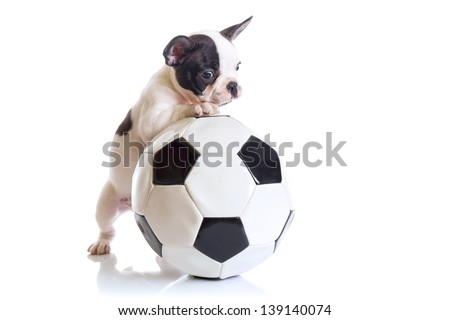 French bulldog puppy with soccer ball over white - stock photo