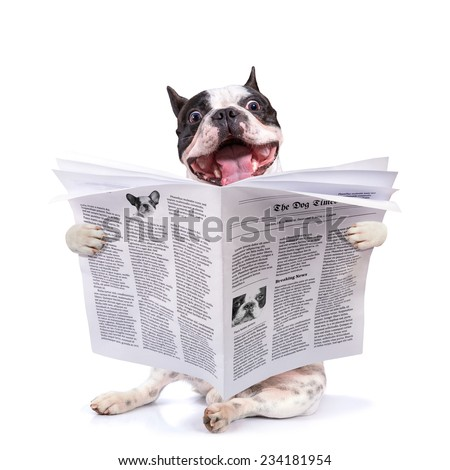 French bulldog reading newspaper over white - stock photo