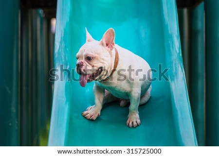 French bulldog sit on slide in park