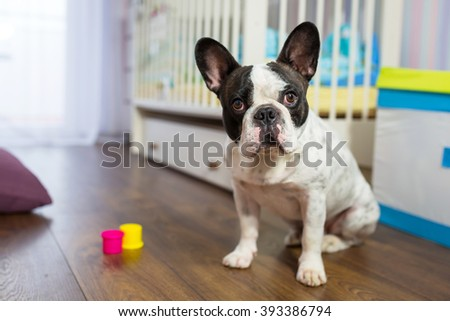 French bulldog sitting in baby room - stock photo