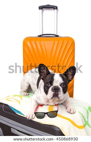 French bulldog sitting on the luggage ready for travel